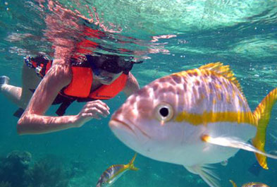 Tours in Cancún and Riviera Maya Snorkeling Adventure