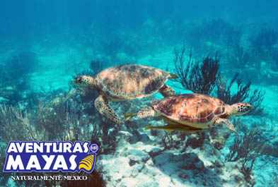 Tours in Cancún and Riviera Maya ATV Xtreme & Snorkel - Single - CUN