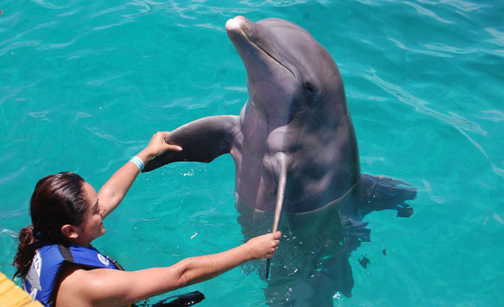 Cabo Travel Solutions Dolphin Royal Swimm Cancun Isla Mujeres